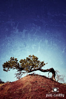 Lone Juniper near Sandia Mountains New Mexico by Jim Crotty
