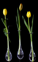 Tulips in Test Tube Vases by Jim Crotty