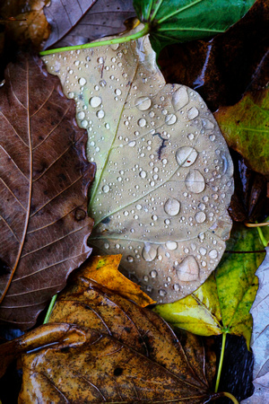 Autumn Rain Details | Nature Photography by Jim Crotty
