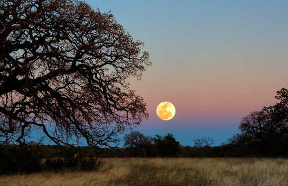 Texas Hill Country Moonrise by Jim Crotty