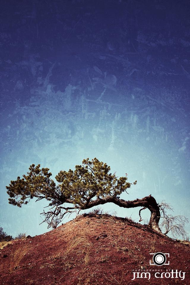 Lone Juniper near Sandia Mountains New Mexico by Jim Crotty
