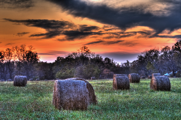 Harvest by Jim Crotty