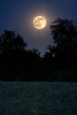Full Honey Moon of June 2014 by Jim Crotty