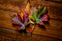 Three Maple Leaves by Jim Crotty-Edit